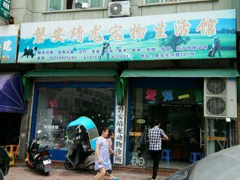 靖龙宠物诊所