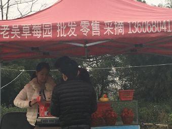 小吴草莓采摘