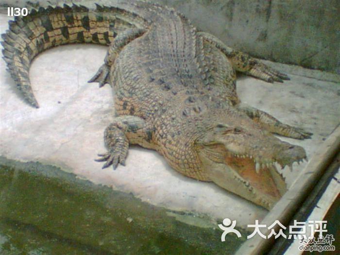 女朋友去香江野生动物世界时买了套票,鳄鱼公园这部分就给我们去玩了.