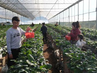 农科院甜甜草莓园