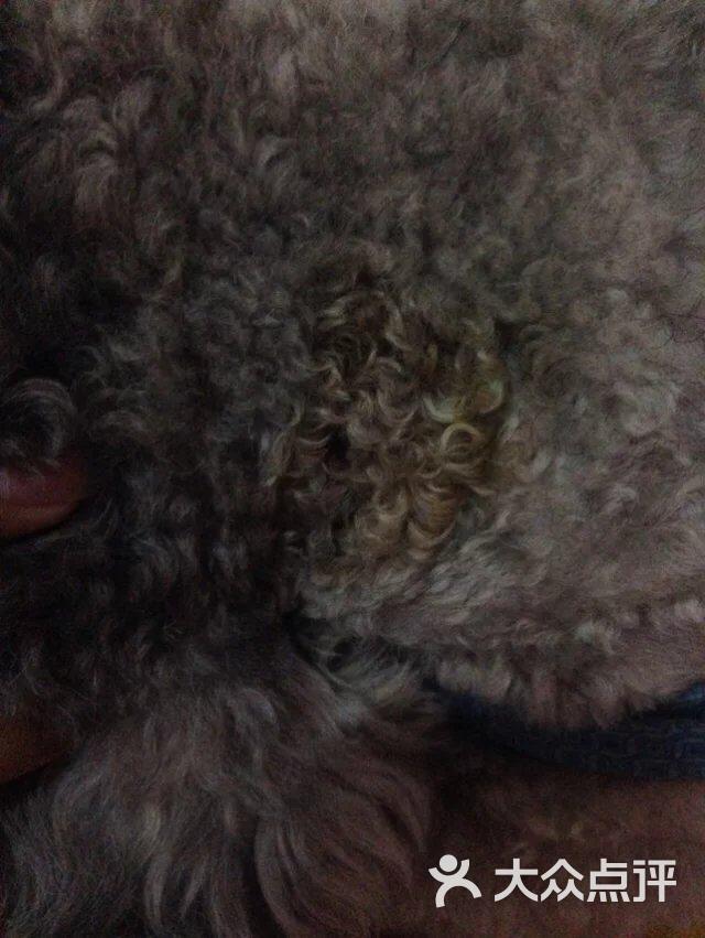 诺安动物诊所-图片-北京宠物-大众点评网