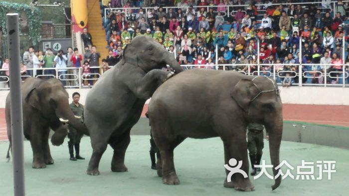 上海野生动物园图片 - 第18929张