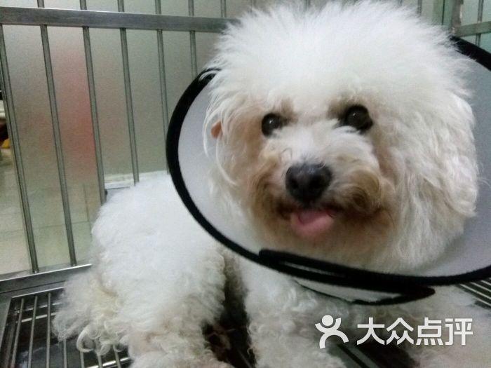 福懋动物医院(淘金店)-图片-广州宠物-大众点评网