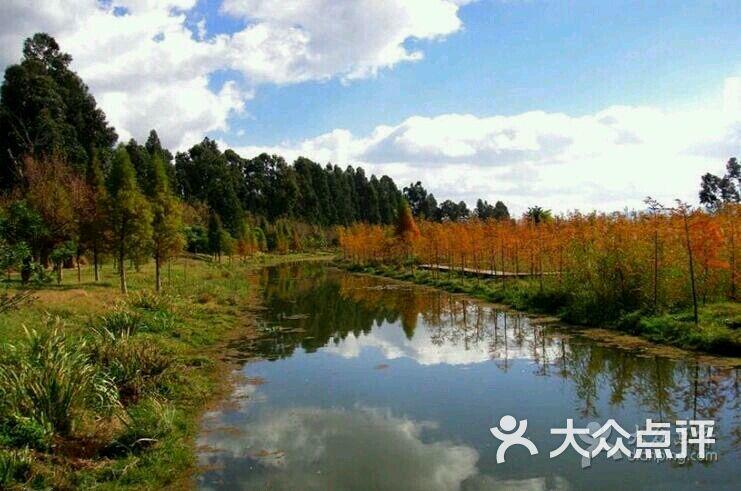 呈贡滇池生态湿地公园图片-北京自然风光-大众点评网