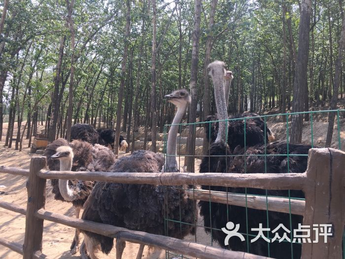 青藏高原野生动物园-图片-西宁周边游-大众点评网