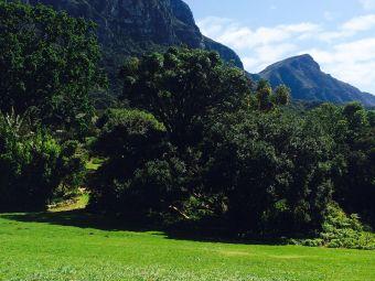 康斯坦博西植物园