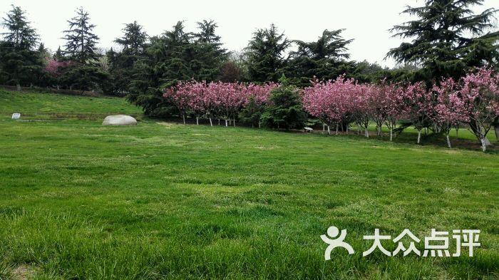 青岛植物园图片 - 第262张