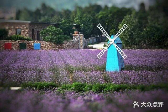 紫海蓝山薰衣草庄园图片 - 第9张