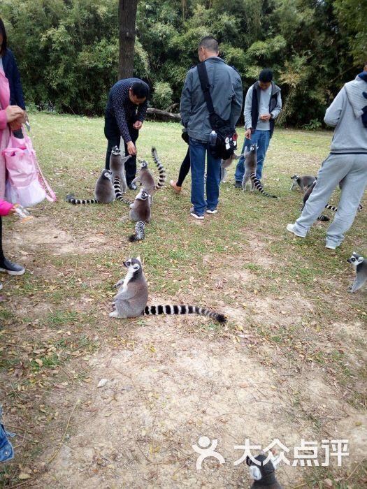 东莞寮步香市动物园图片 - 第152张