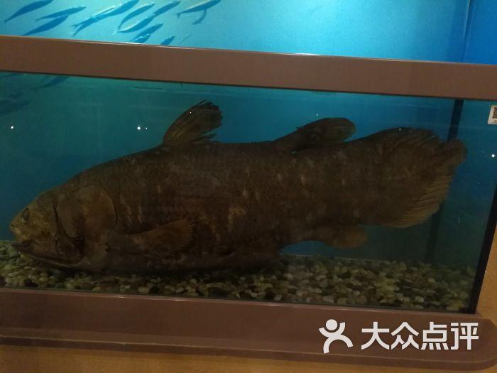 中国古动物馆图片 - 第16张
