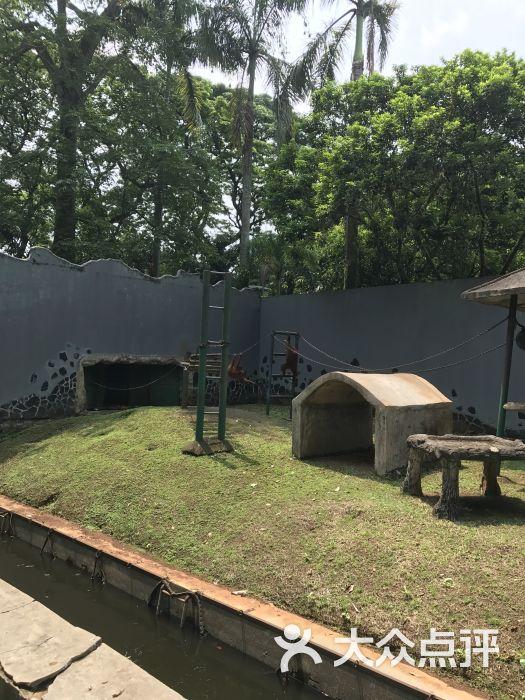 拉古南动物园-图片-雅加达景点玩乐-大众点评网
