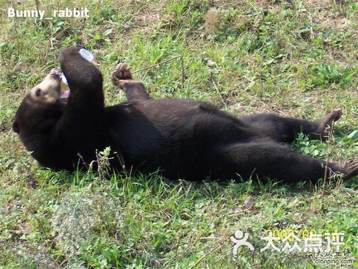 八达岭野生动物世界美男子图片-北京动物园-大众点评网