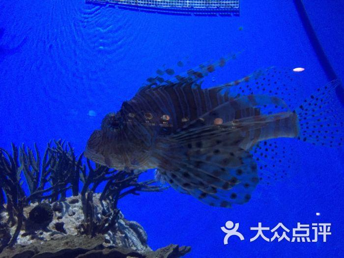 北京海洋馆-图片-北京景点-大众点评网