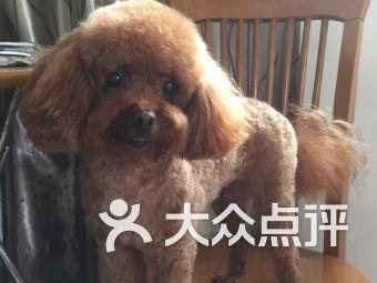 小咪宠物(莘庄店)
