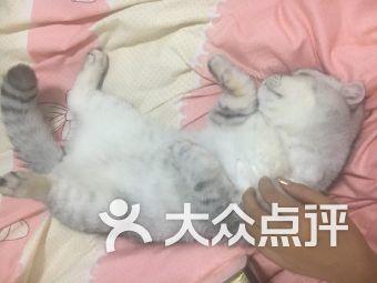 PURRiNN猫咪旅店-宠物寄养