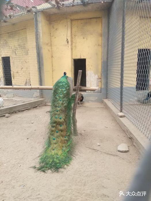 渭滨公园动物园图片 - 第3张