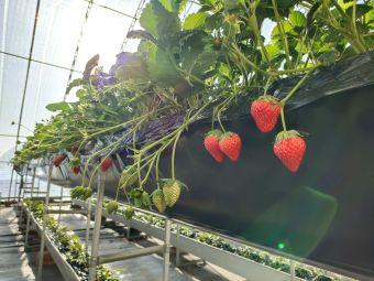 龙海源草莓采摘园