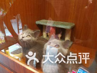 萌窩窩寵物 名貓生活館