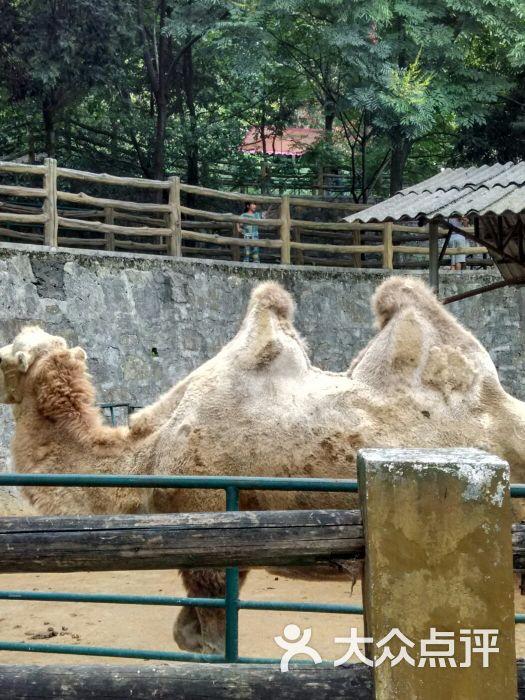 遵义动物园图片 - 第1张