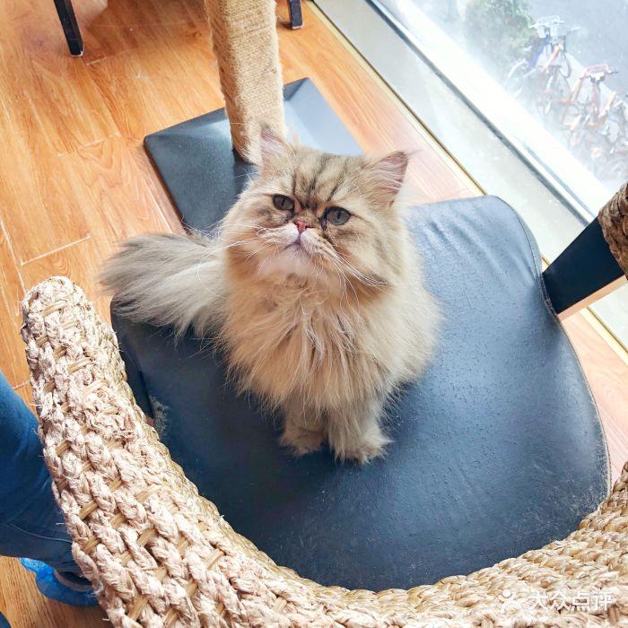 贝斯特猫咪咖啡馆图片 - 第128张