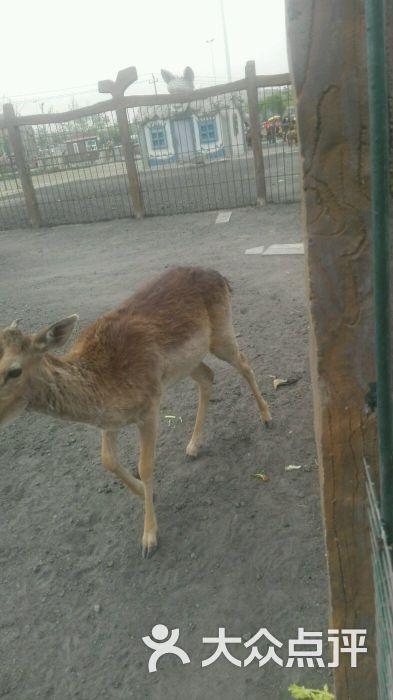 光合谷动物园图片 - 第448张