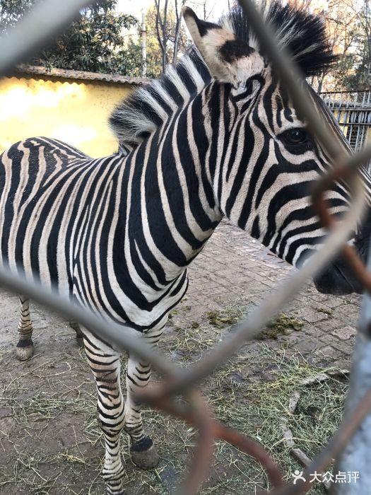 渭滨公园动物园图片 - 第75张