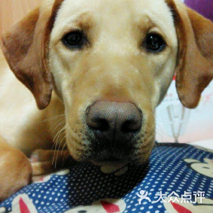 维多动物医院图片-北京宠物医院-大众点评网