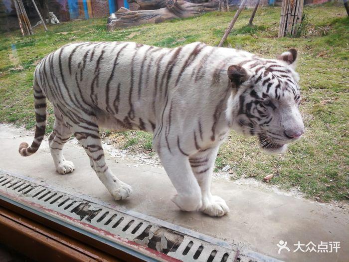 永鸿野生动物世界图片 - 第72张