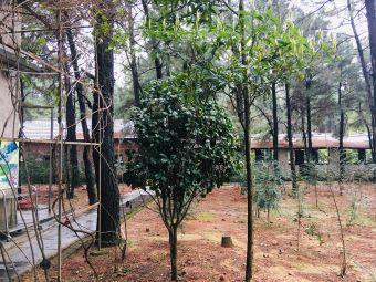 深林奇境生态园
