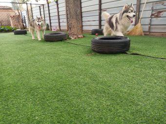 大良之家宠物训练寄养中心