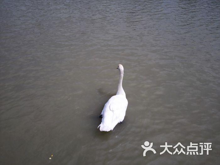 海口天鹅湖动物乐园图片 - 第2张