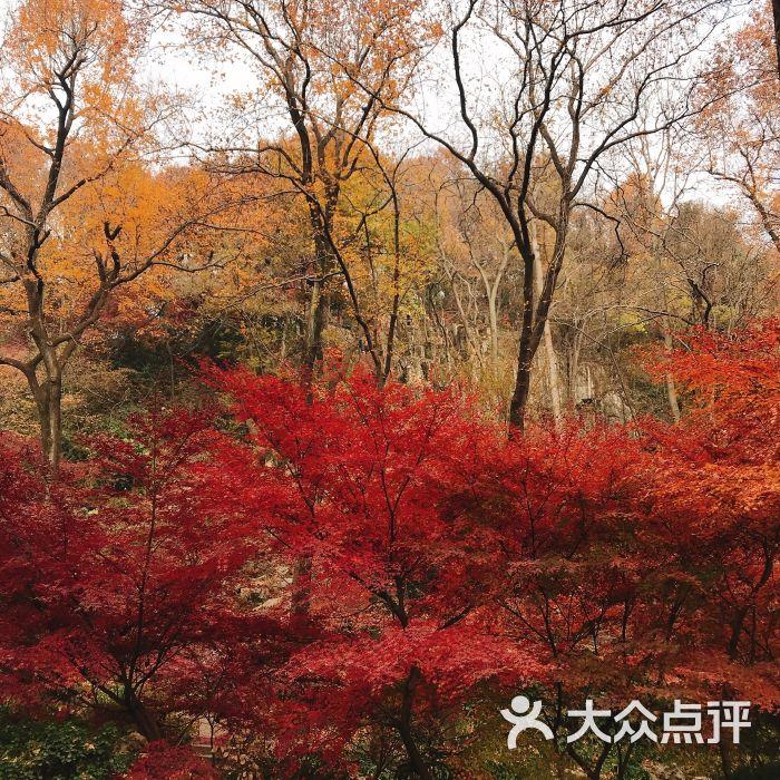 栖霞山名胜风景区图片 - 第2张