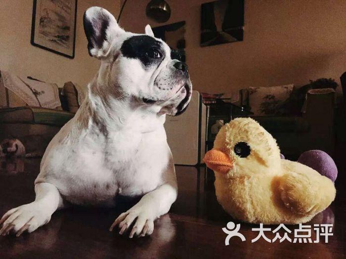 齐齐宠物家庭寄养可爱的丑龙尼图片 - 第318张