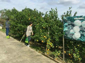 汉忠柑橘采摘园