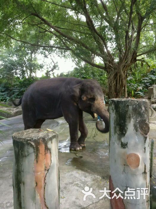 深圳野生动物园的点评