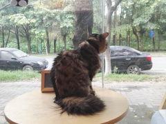 煎饼猫猫-22:22咖啡馆