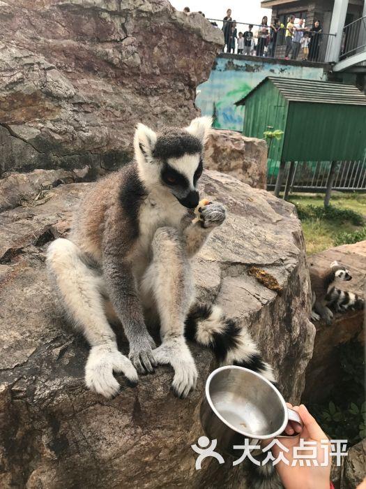 无锡动物园·太湖欢乐园的点评