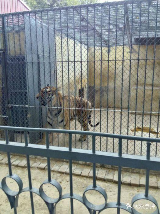 渭滨公园动物园图片 - 第63张
