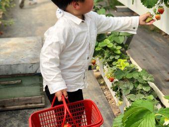 仰徐草莓生态采摘园