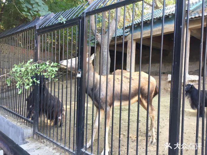 南山公园动物园图片 - 第1张