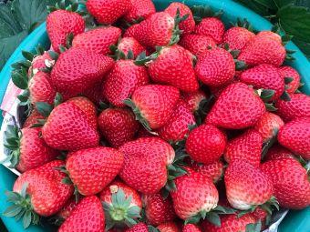 老余家草莓园