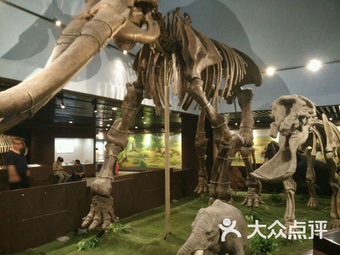 中国古动物馆-图片-北京周边游-大众点评网