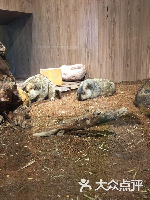 天津zoonly动物主题公园图片 - 第17张