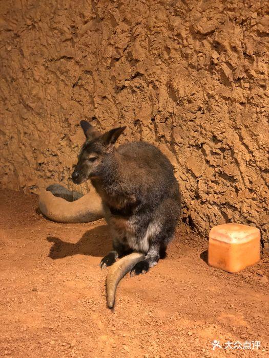 天津zoonly动物主题公园图片 - 第851张