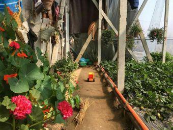 潘家有机富硒草莓采摘园