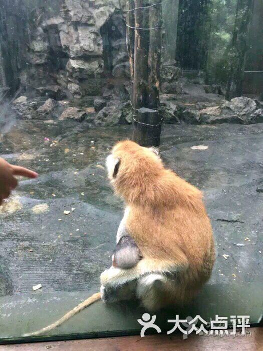 杭州动物园-图片-杭州周边游-大众点评网