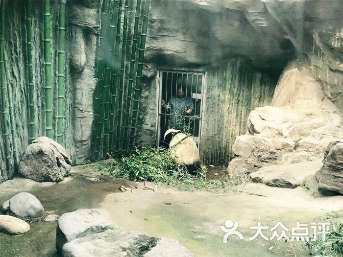 北京动物园大熊猫吃竹子图片 - 第471张