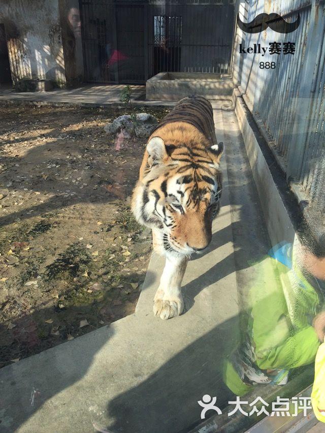 苏州动物园的全部评价(第4页)-苏州-大众点评网