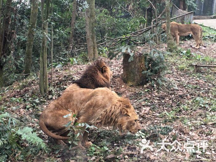 碧峰峡野生动物园图片 - 第385张