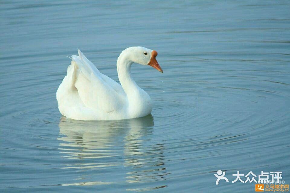 龙王烧鹅 大白鹅 环境 大白鹅图片 襄阳美食
